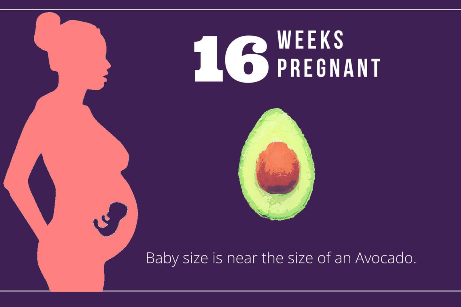 16-Weeks-Pregnant-Hero-Image