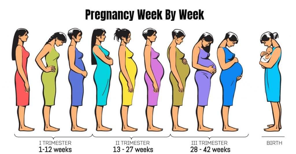 Week-By-Week-Pregnancy-Image